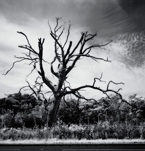 Petrified Tree nr Smallburgh - The Black & White Gallery