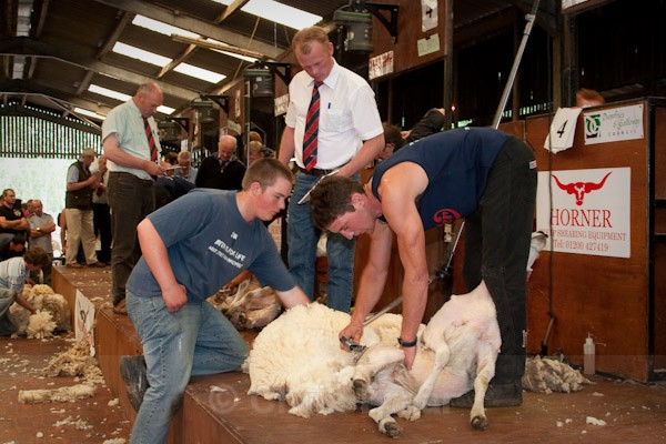 41 - Shearing Competition