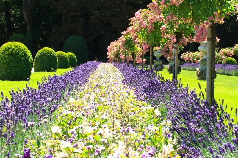 Flower bed - European Landscapes