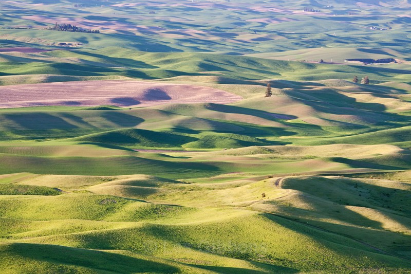 fields 10 - Palouse