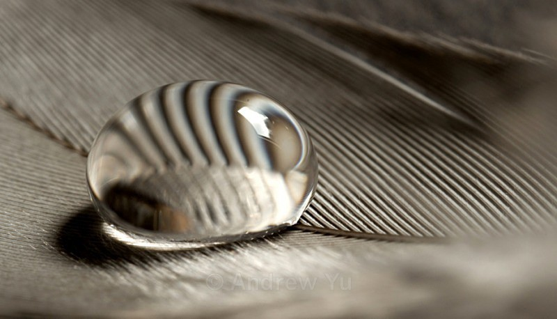 Feather Weight - Macro Photography