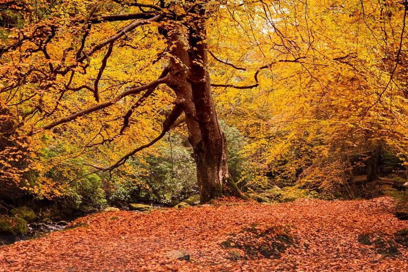 Autumn Scene - Tollymore Forest Park
