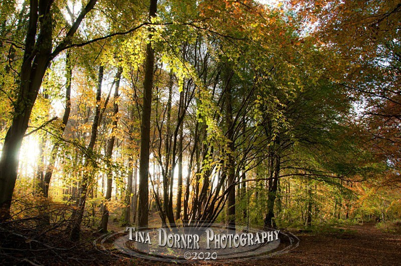 Path of Autumn Gold from Autumn Forest of Dean and Wye Valley Portfolio by Tina Dorner Photography