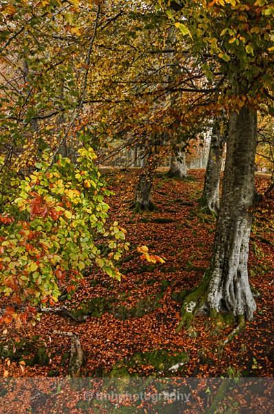 Autumn Colours. - Landscape