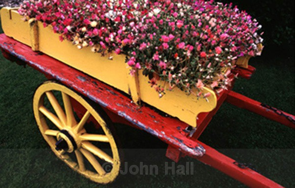 yellow cart of spring flowers.