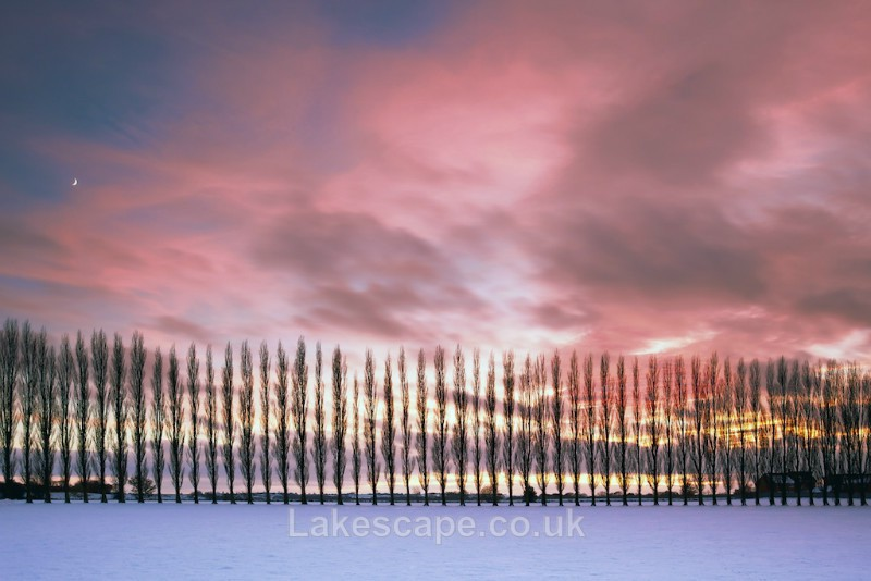 Poplar Sunset_5427 - Lincolnshire