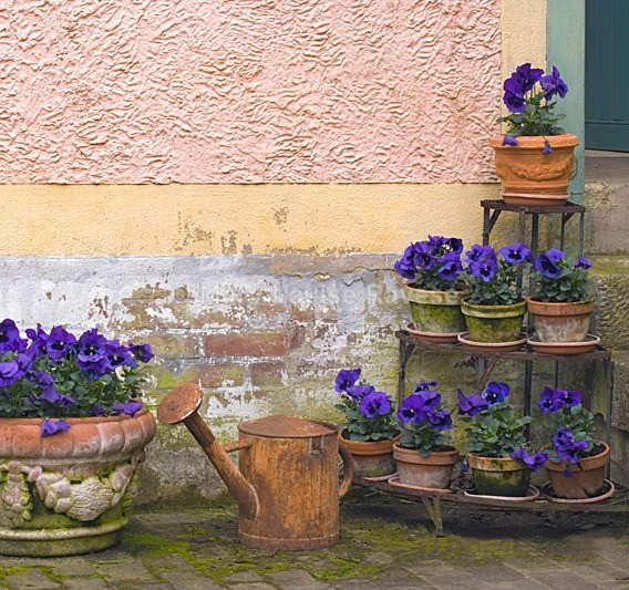 Courtyard Garden - Travel