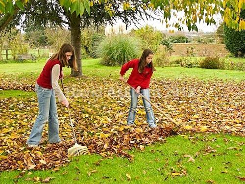Raking leaves - Autumn