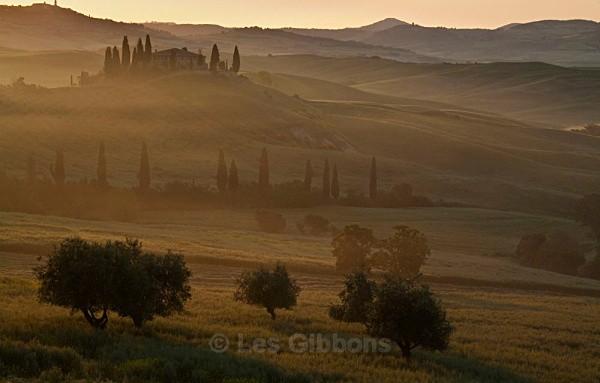 golden glow - Tuscany