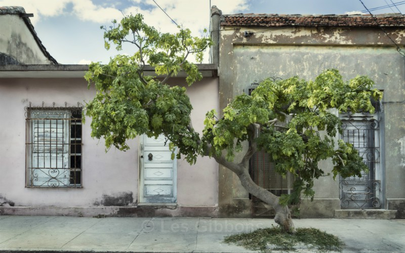 The Tree - Cuba