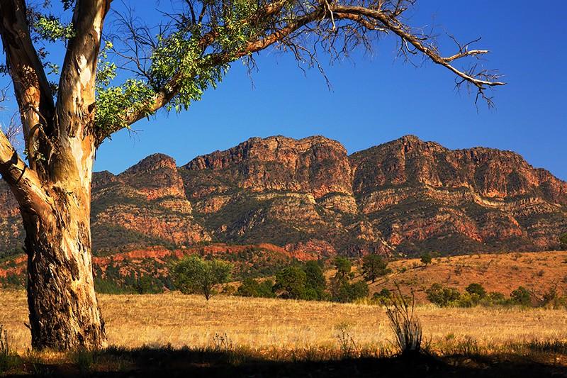 Elder Range2-0659_1 - FLINDERS RANGES PHOTOS