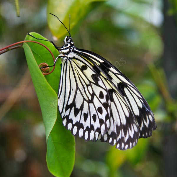 Butterfly - Wildlife