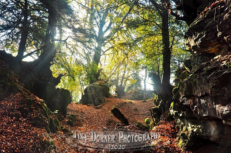 Forest Floor and rockface from Autumn Forest of Dean and Wye Valley Portfolio by Tina Dorner Photography