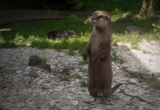 1 - Otters