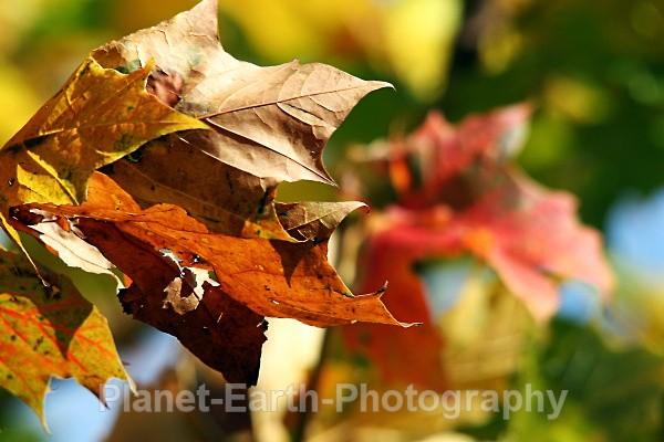 Autumn Colours - Nature / Macro Photography