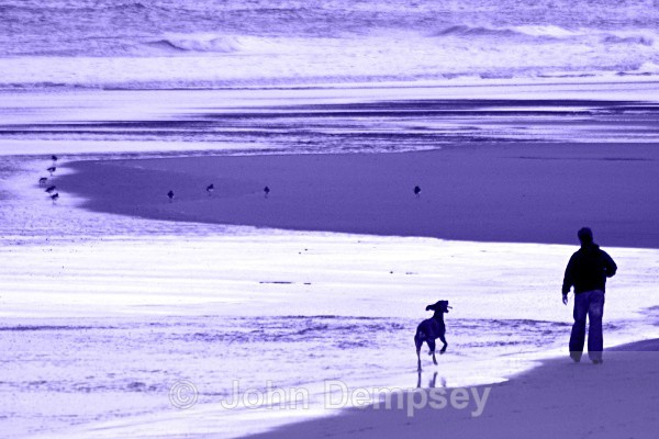 Billy  & Meeko 4 - Walking the Dog