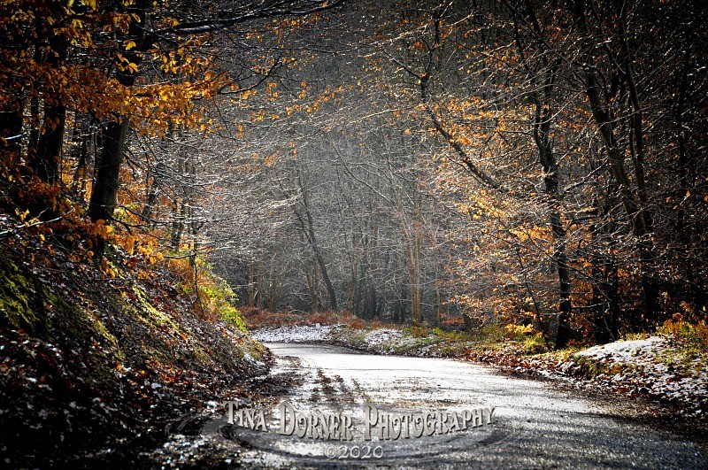 Road tunnel through the hedges in snow. Winter Landscape portfolio by Tina Dorner Photography,  Forest of Dean and Wye Valley, Gloucestershire
