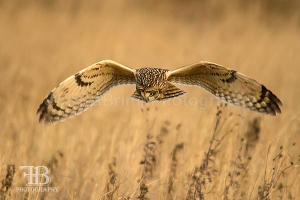 SOE-16 - Birds of Prey