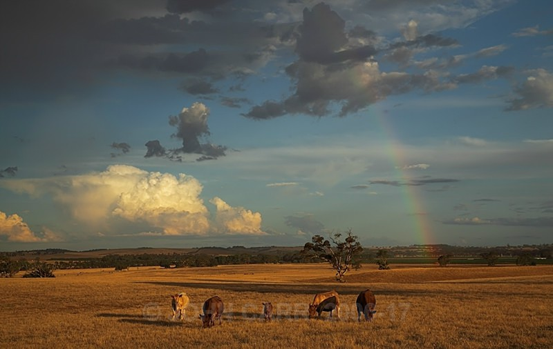 Five Cows and a Rainbow-0112 - STORM/CLOUD CHASE PHOTOS 23/1/2012