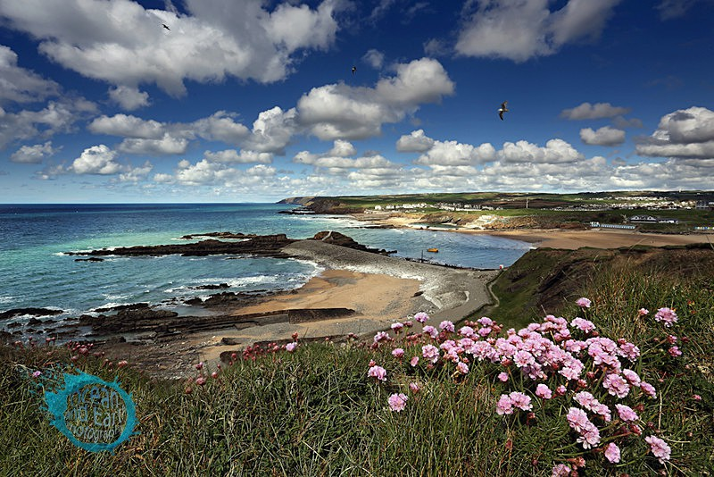 Bude in Bloom - Seascapes