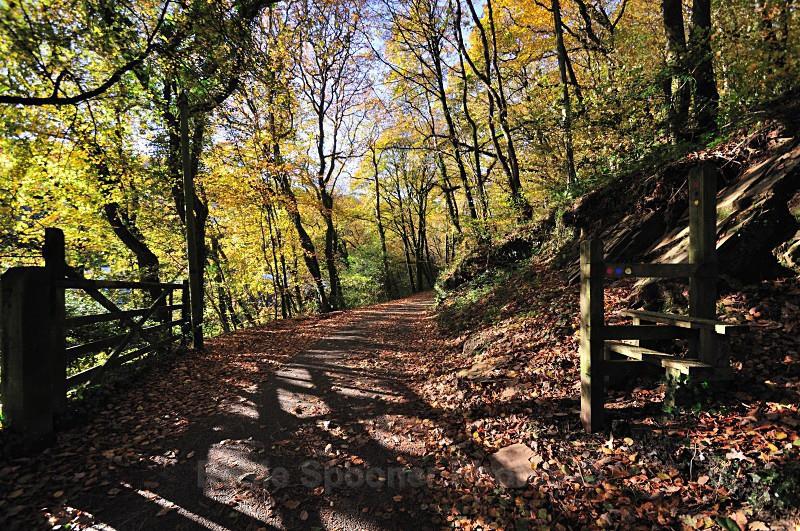 LO30 - Looe - Kilminorth Woods gateway and stile - Greetings Cards Looe