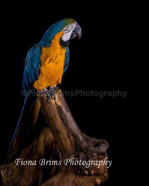 wow studio-26 - Birds of Prey