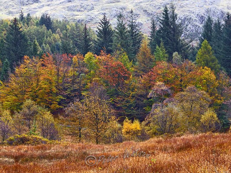 Langdale Fells Cumbria England - Forest & Woodland