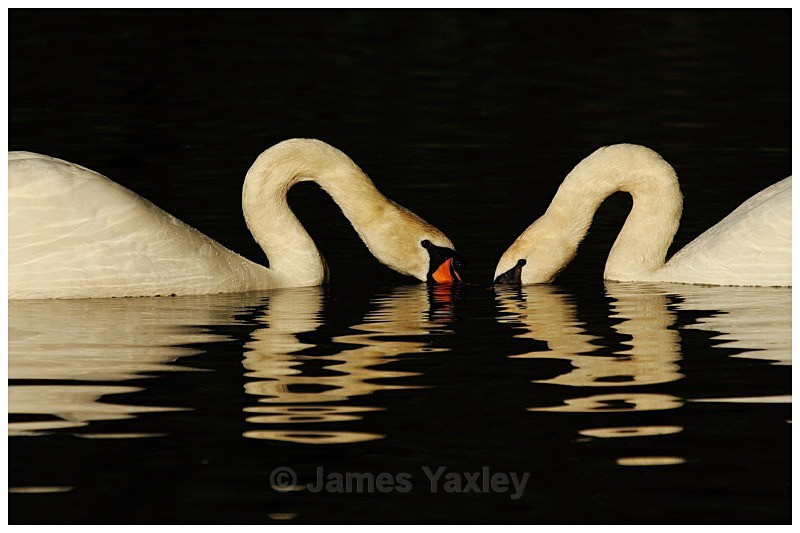 Two Hearts - The British Wildlife Photography Awards 2009 to 2014