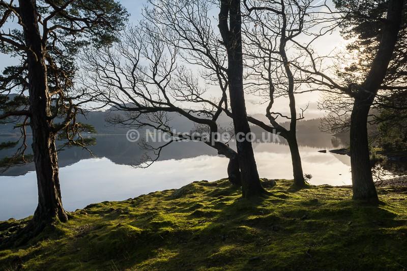 Brandelhow Park   Derwent Water   Lake District Landscape Photography