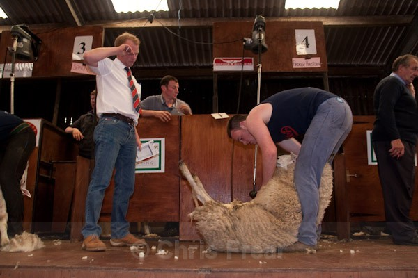 8 - Shearing Competition
