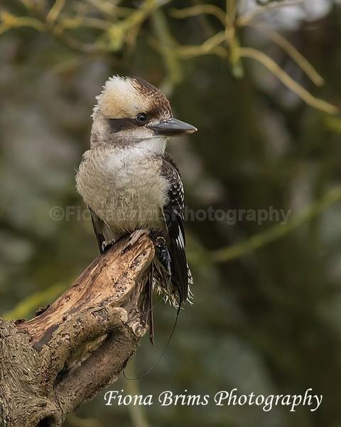 wow oct 3-24 - Birds of Prey