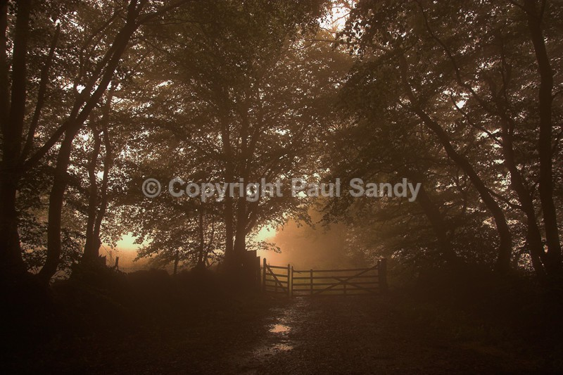 Gate, East Hill Strips near Ottery St Mary, Devon - Featured Images