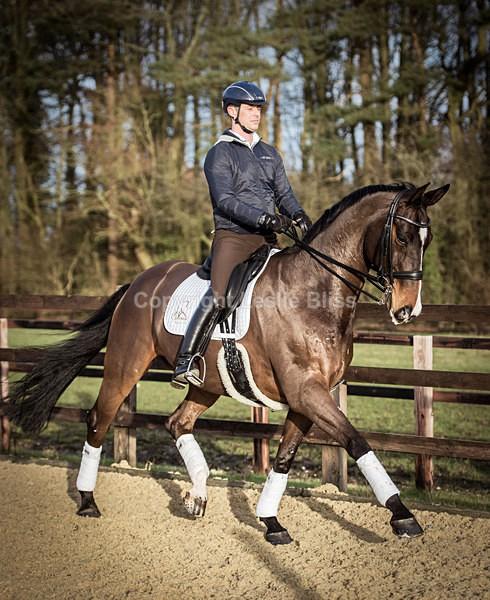 Spencer Wilton - Dressage Rider Portraits
