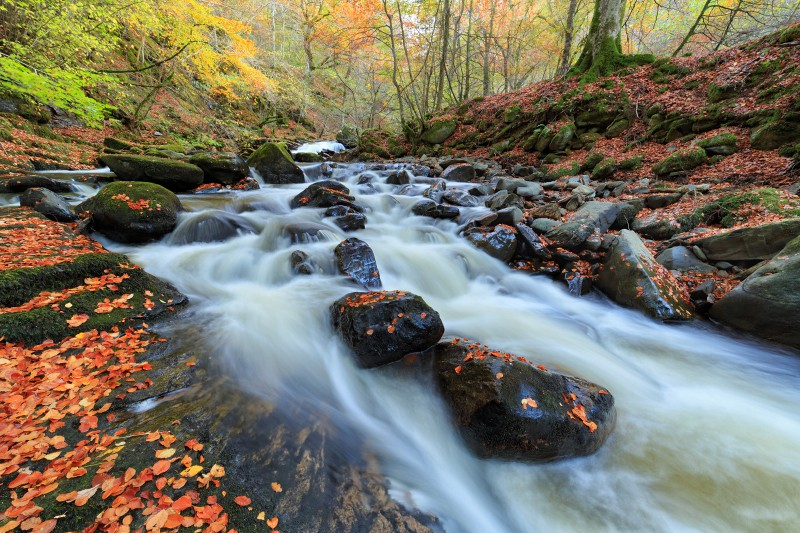 Birks of Aberfeldy | Autumn Scotland Landscape Photography