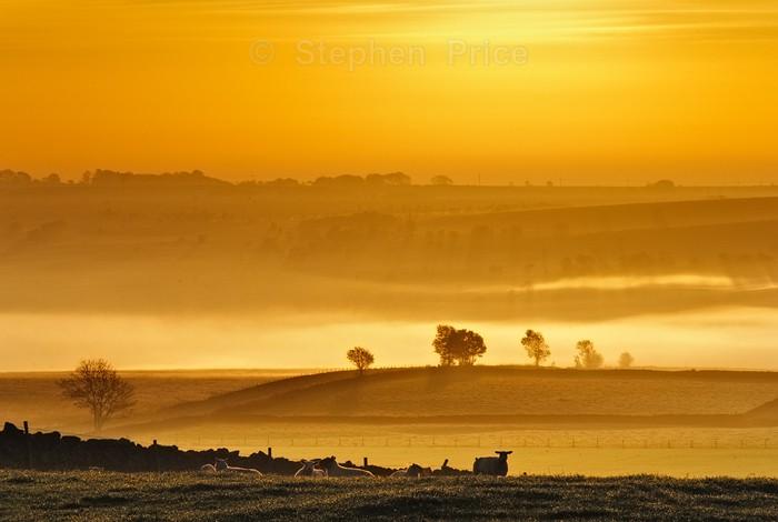 Golden Sunrise Photo | Lone Sheep Burbage Edge