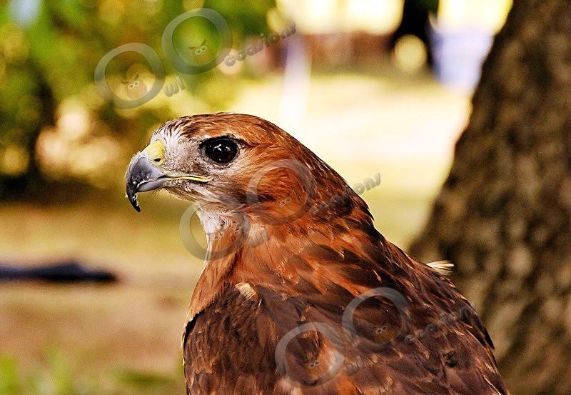 Maizie - Our Birds