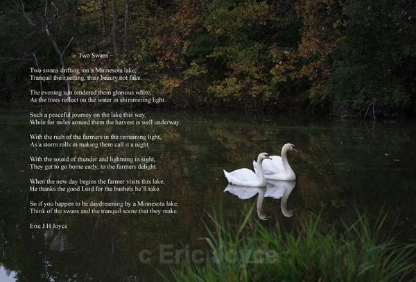 Two Swans poem II - SW Minnesota