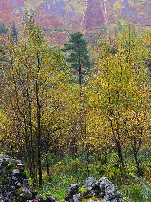 Wythburn Fells Cumbria England - Forest & Woodland
