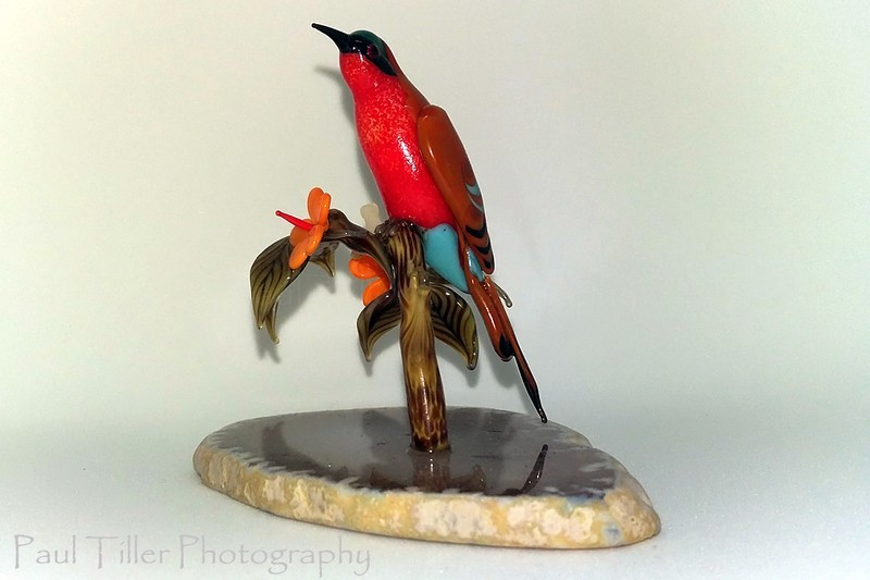 Southern carmine bee-eater - The art of glass