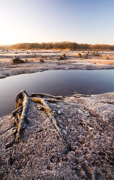 ice & frost winter scene, the gearagh, macroom, co. cork, ireland.