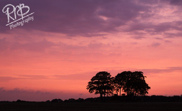 Trees At Dusk - Other UK Landscapes