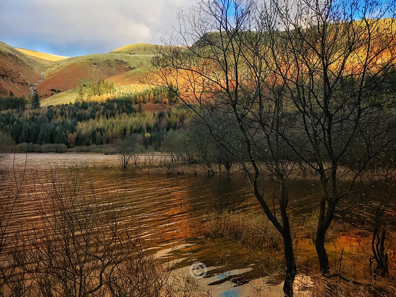 Thirlmere Gold - Lake District