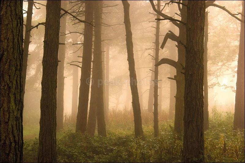 Misty Woodland - Photographs of Woodland & Rivers