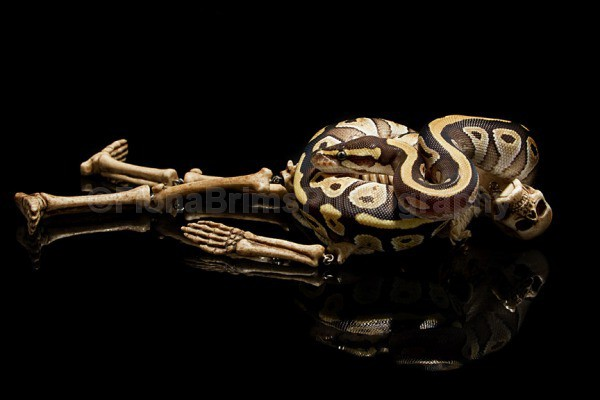 snakies-32 - Reptile Photography