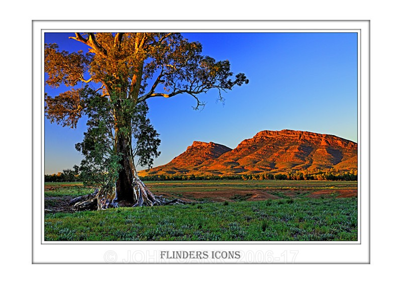 Beautiful Wall Art print  with a Border, showing the Cazneaux Tree and Ramparts of Wilpena Pound, South Australia.