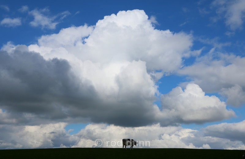 Cow and Clouds - Peak District