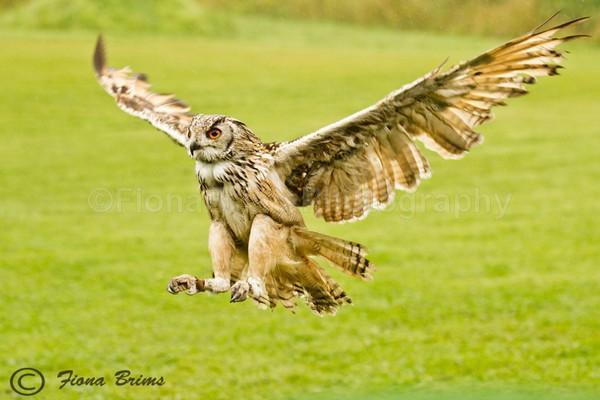 wow-15 - Birds of Prey
