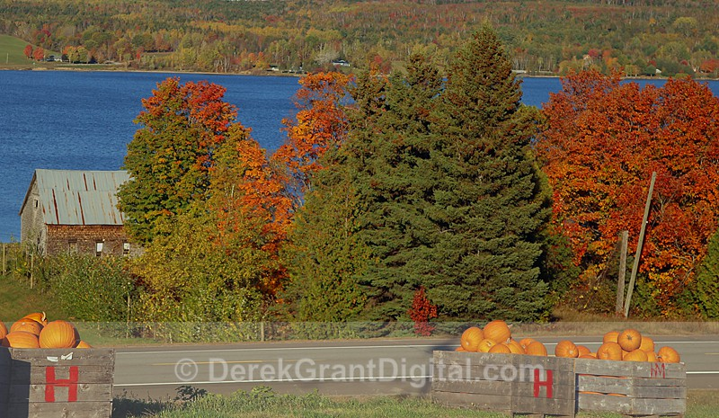 Autumn Festival Pumpkins for Sale - New Brunswick Canada - Autumn Festival