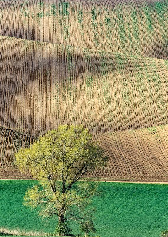 tree2 - Moravia