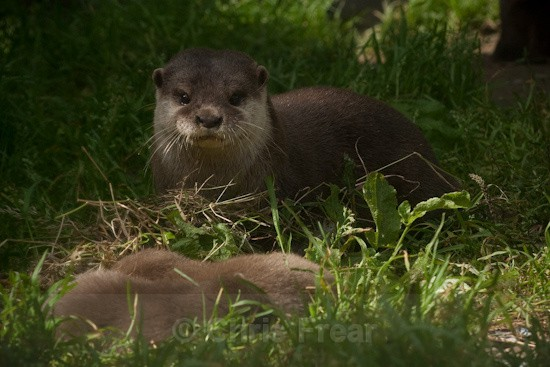 10 - Otters